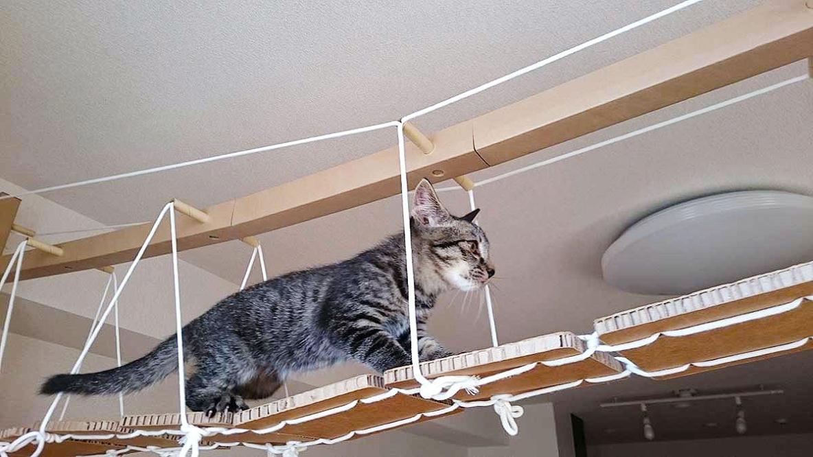 スマホで仕掛けを動かせる、室内ネコ用の「フィットネス遊具モジュール」