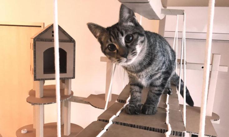 かわいいネコの室内用遊び道具
