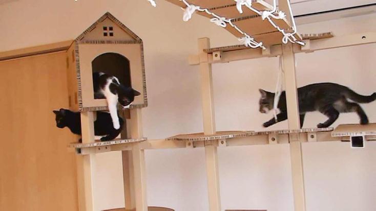 かわいいネコのための室内用遊具