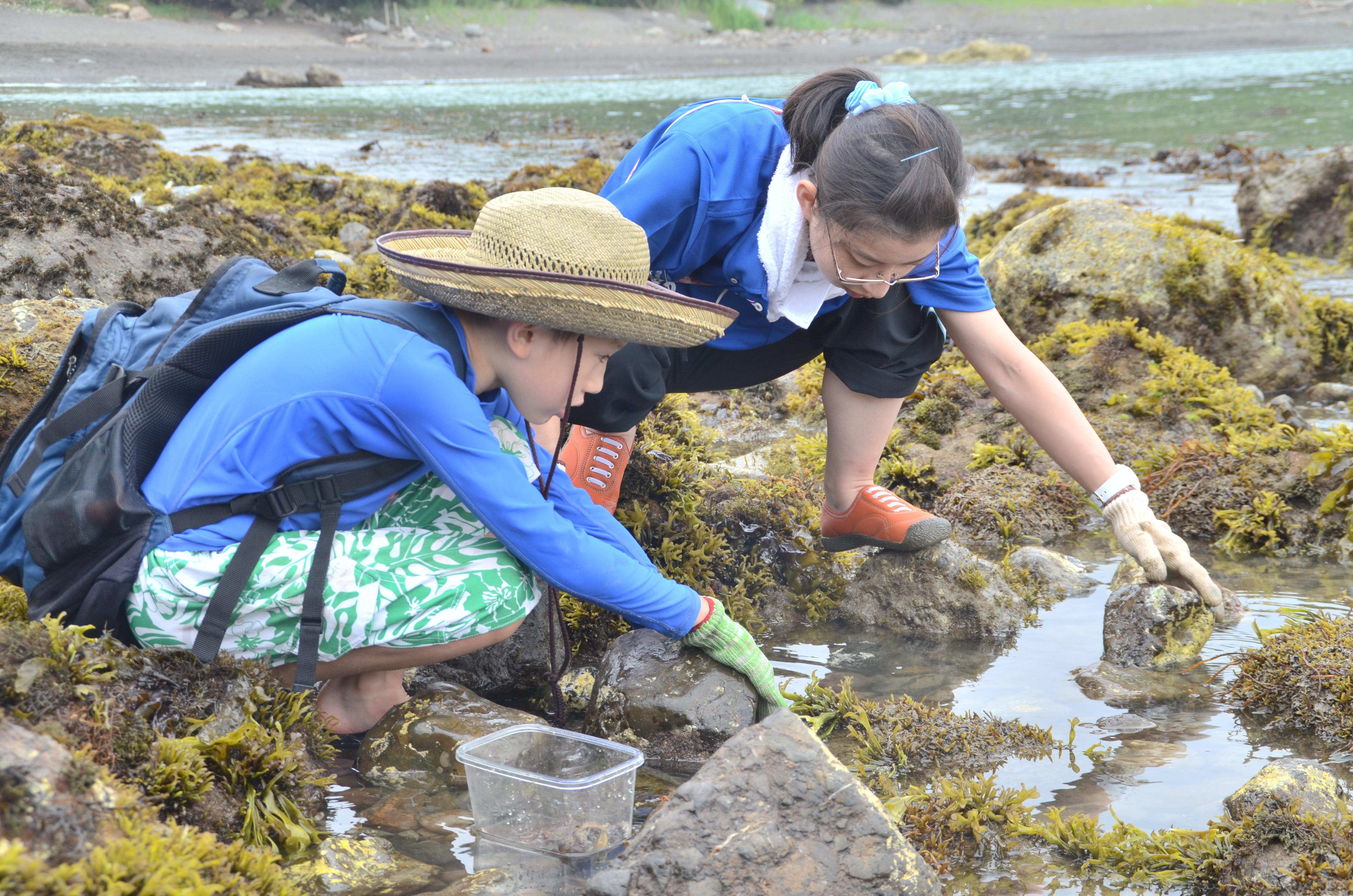 科学館での最初の企画展のテーマは、「海の生物の化石」