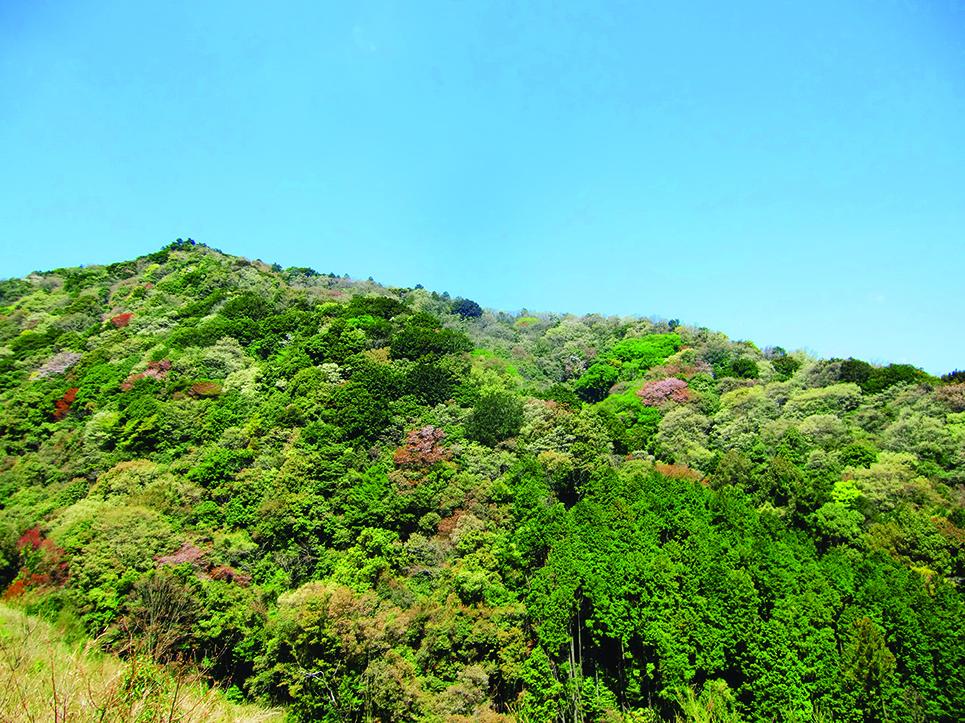 日本の原風景をイメージさせる「里山」
