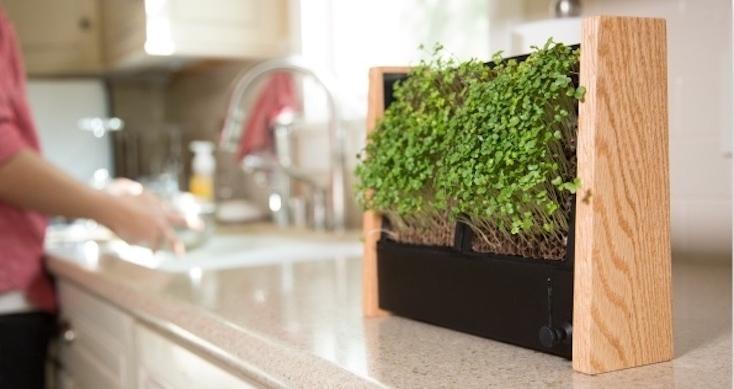 自宅で簡単に野菜を育てるキットEcoQube Frame