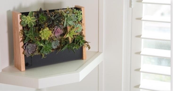 壁にかける植物栽培キットEcoQube Frame