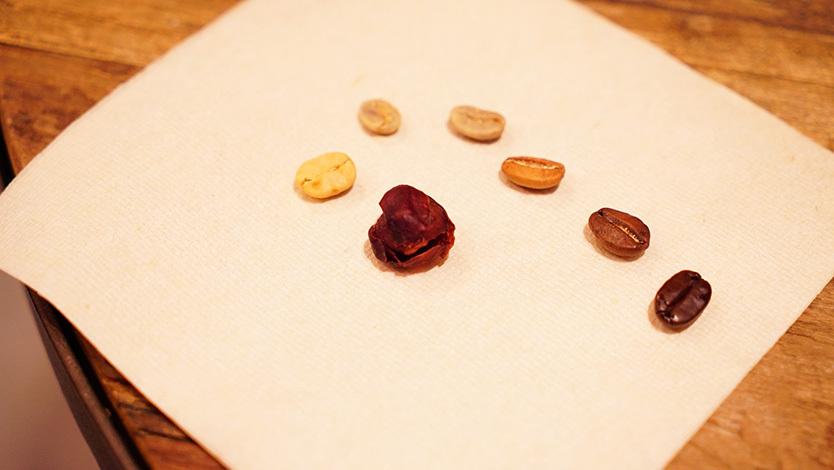 収穫から焙煎までの段階を追ったコーヒー豆
