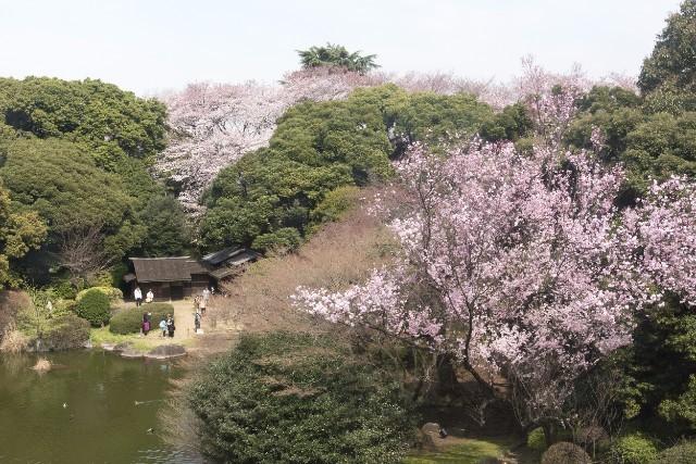 「春の庭園開放」は5月7日まで