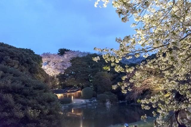 ライトアップによって、ここが都内・上野とは思えなくなってしまうほど素晴らしい夜景が楽しめます