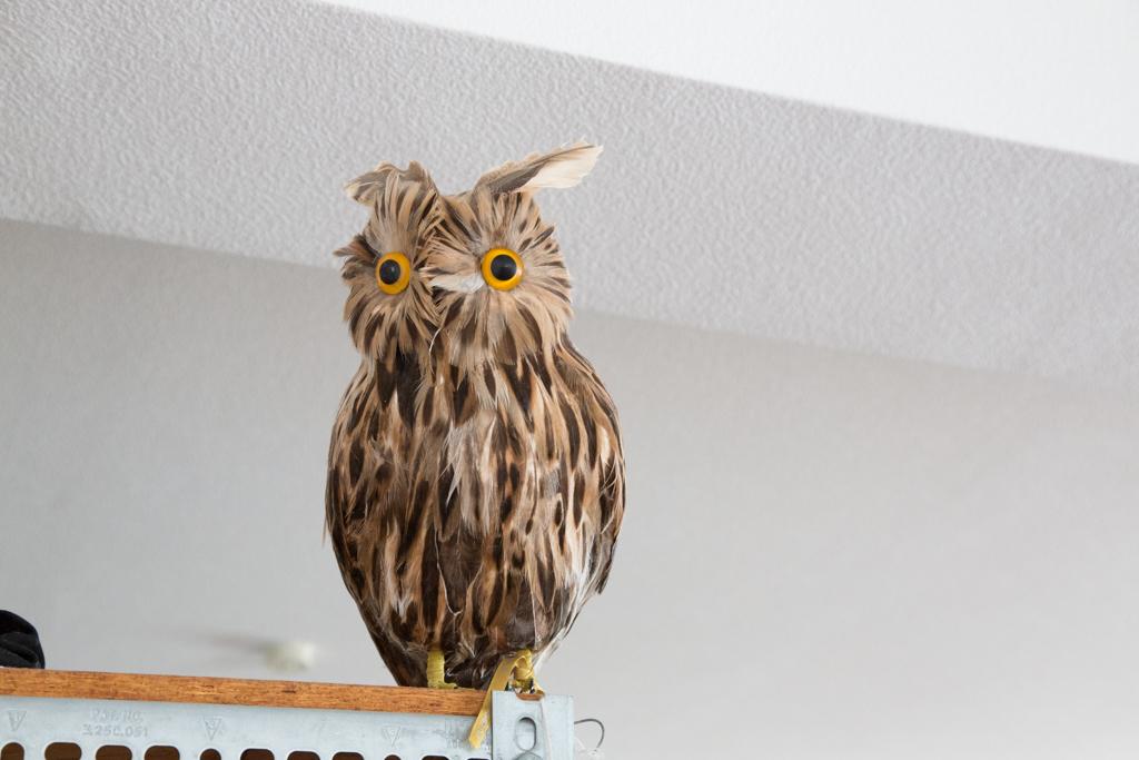 部屋に点在する、鳥の置物たち