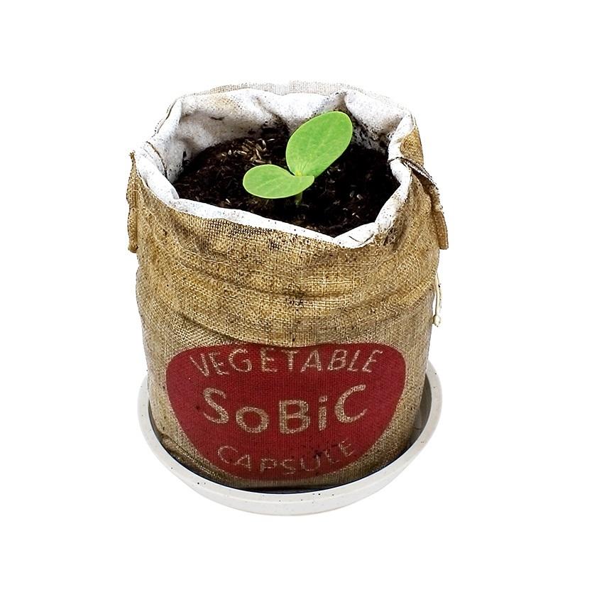 手元にこの野菜カプセルが届いたら、受け皿の上に乗せて袋を開け、土にたっぷり水をああげて付属の種をセットするだけ