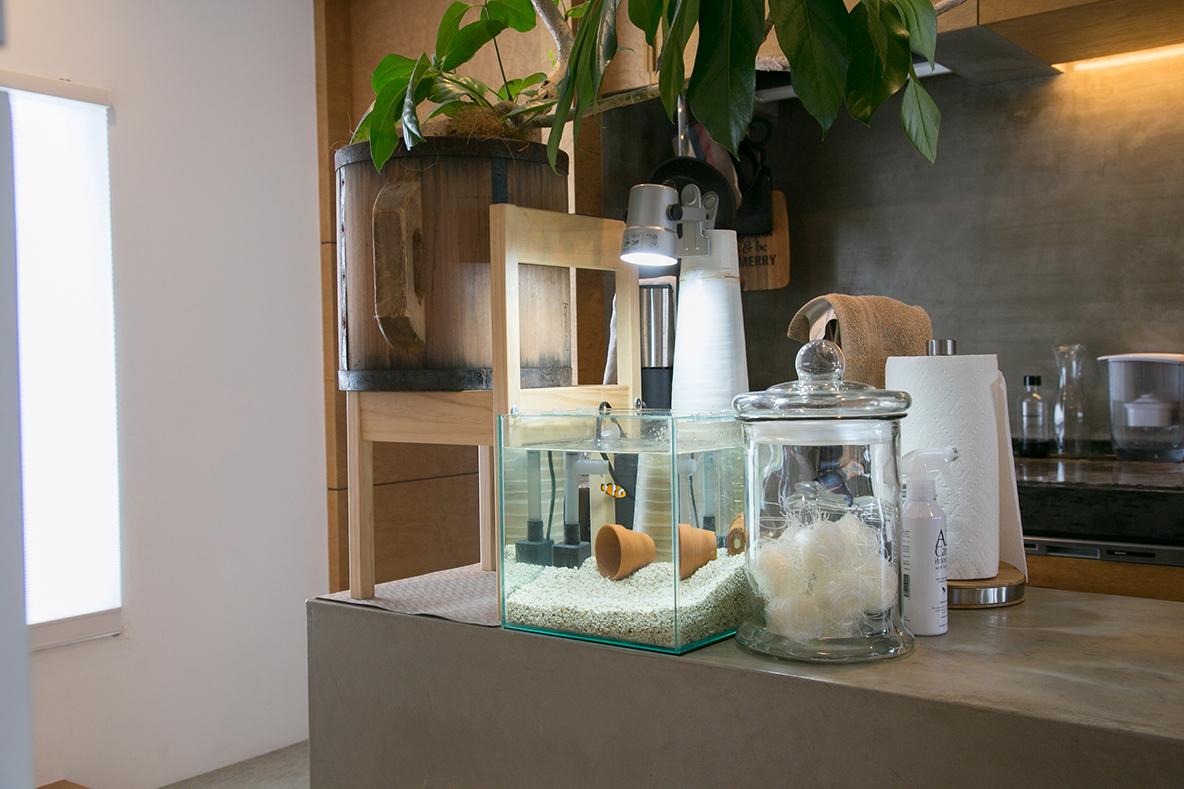 趣味の熱帯魚を飼育する水槽