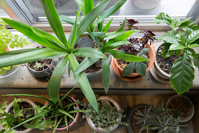 家に植物をたくさん飾る