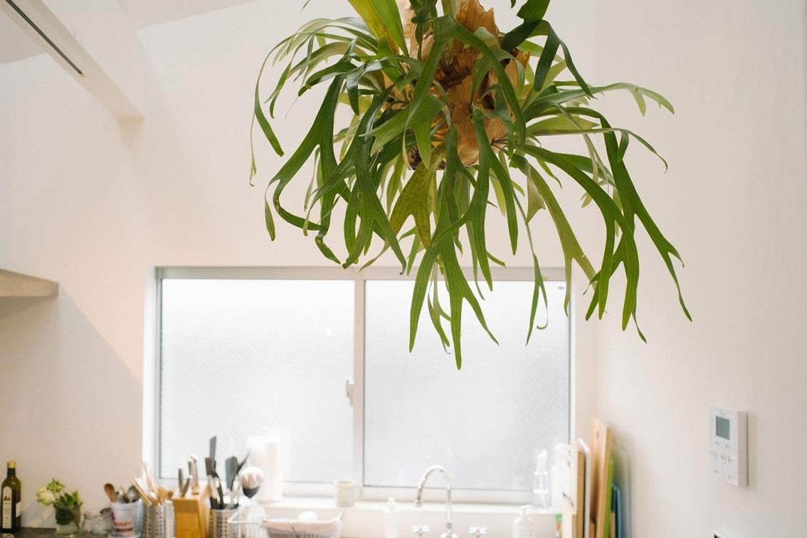 観葉植物の豊富な家
