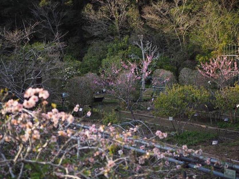 敷地内で栽培している植物、果実などを原料に