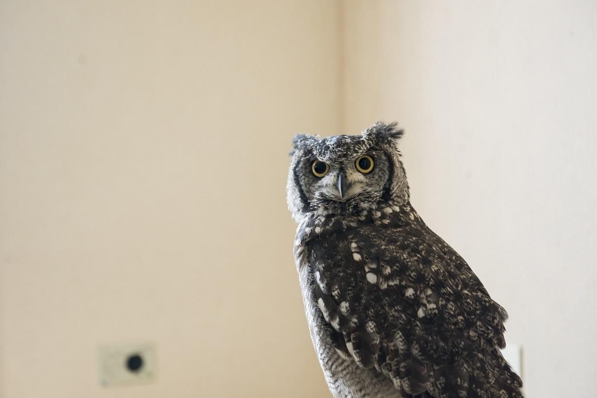 噂通り「フクロウは開運の動物」だということを、江藤さんの運気の変化が証明してくれているようだ