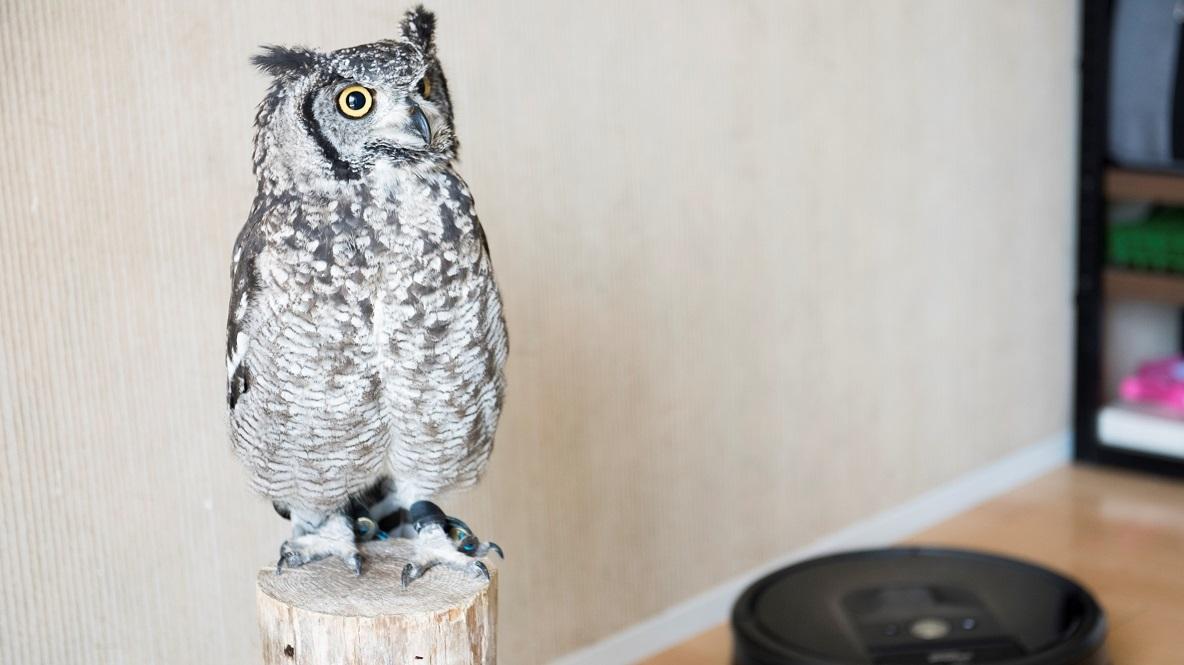 WEBデザイナーは「フクロウが住みよい環境」を全力かけて守る 好きと暮らす   ROOMIE(ルーミー)
