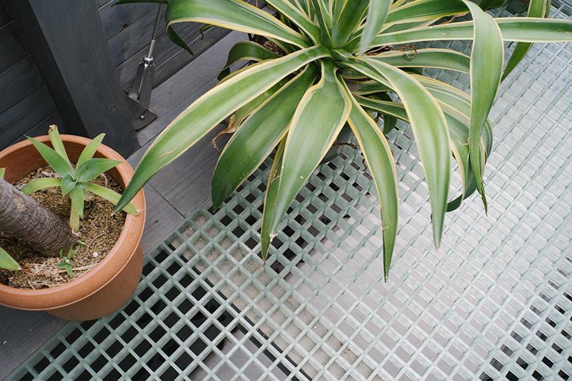 植物のナーセリー