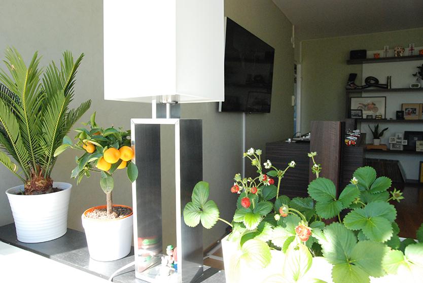 窓辺ではイチゴやみかんを栽培