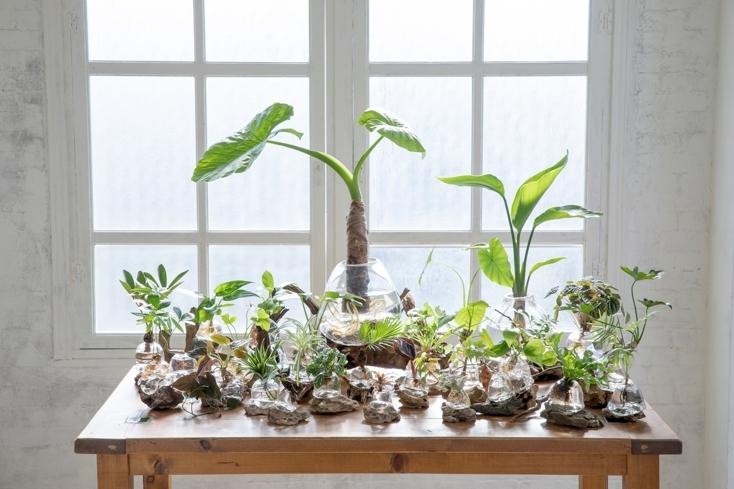 美しいアクア盆栽