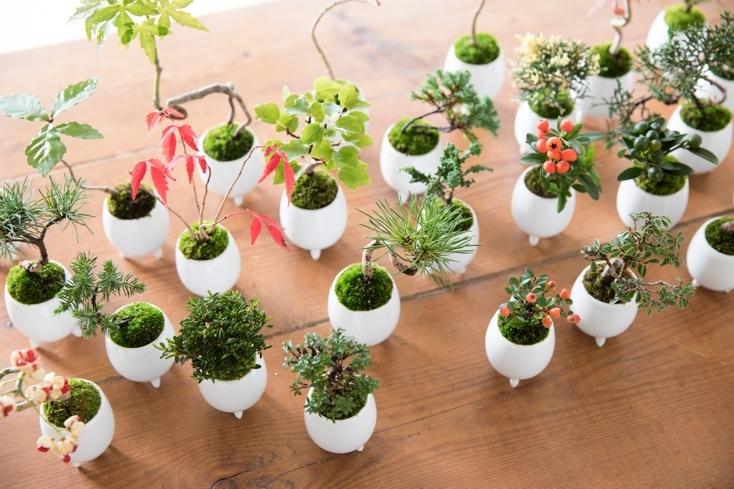 おしゃれなマイクロ盆栽