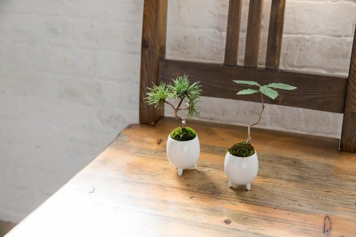 かわいくておしゃれなマイクロ盆栽