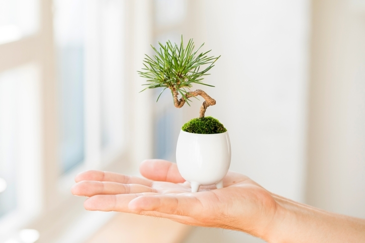 手のひらサイズでかわいいマイクロ盆栽