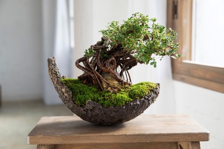 プレゼントに最適な仏像盆栽
