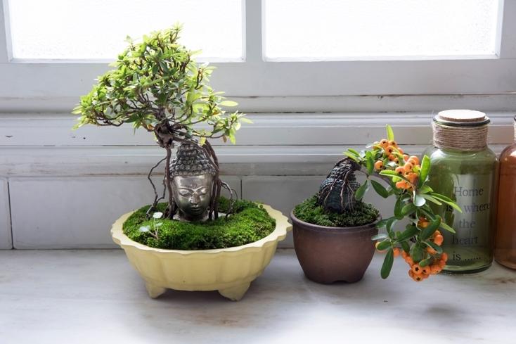 育てやすい仏像盆栽