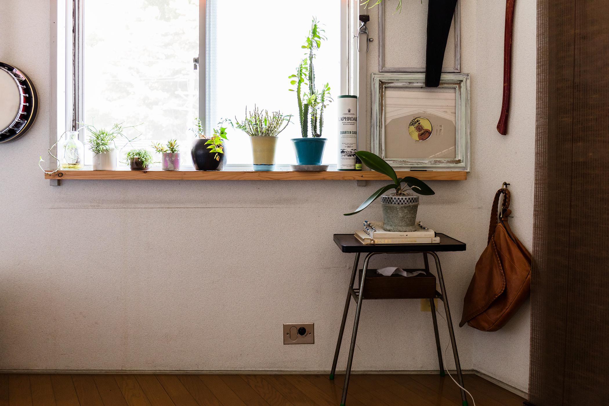 植物の多い部屋