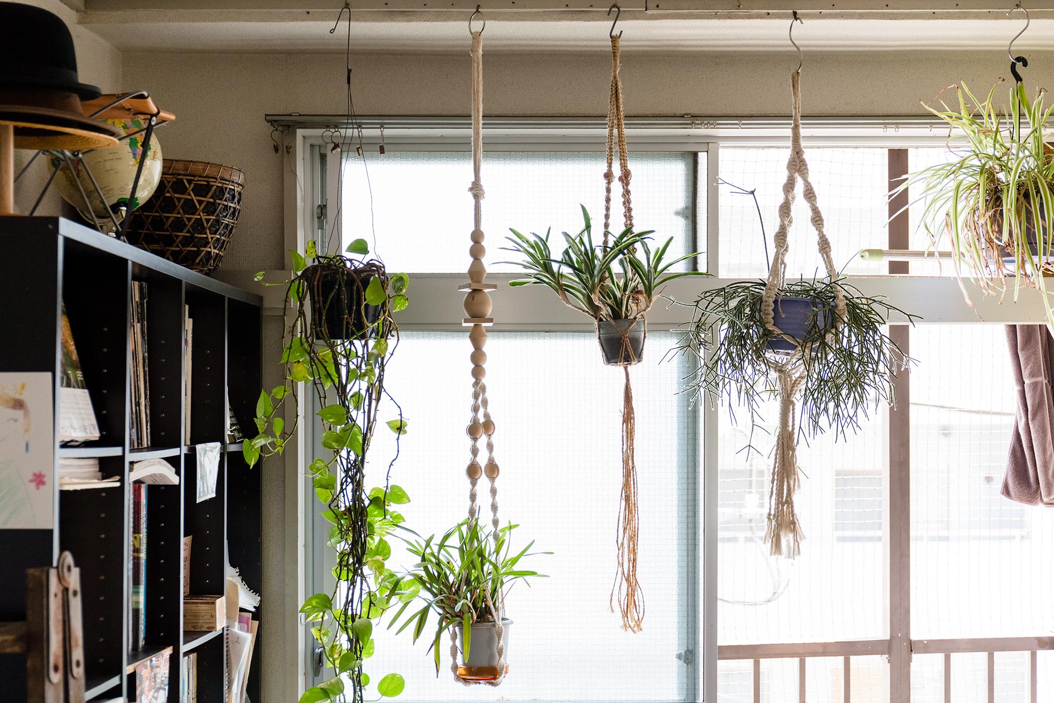 ぶら下げたお洒落な植物
