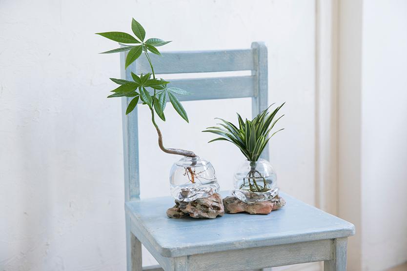 気軽にグリーンを取りいれるアクア盆栽