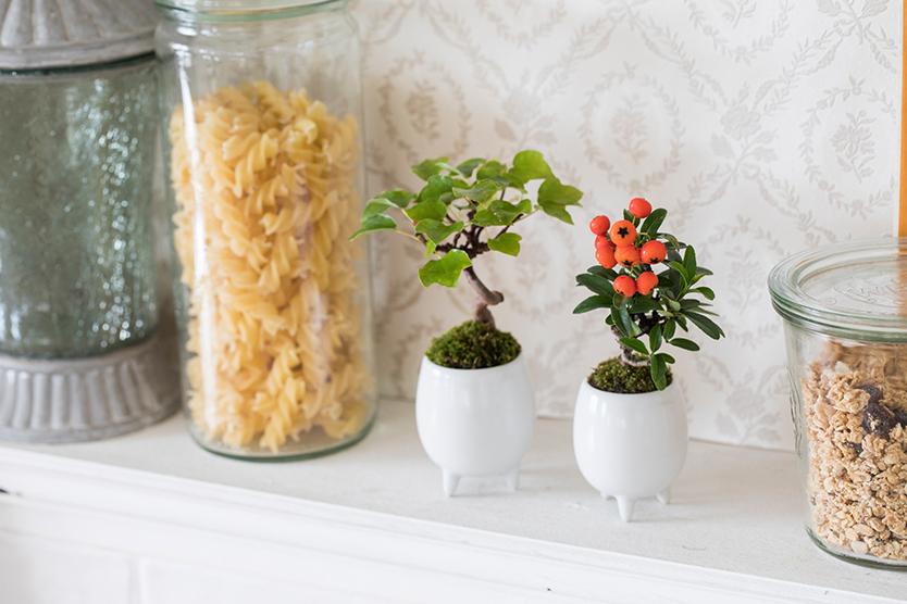 育てやすいマイクロ盆栽