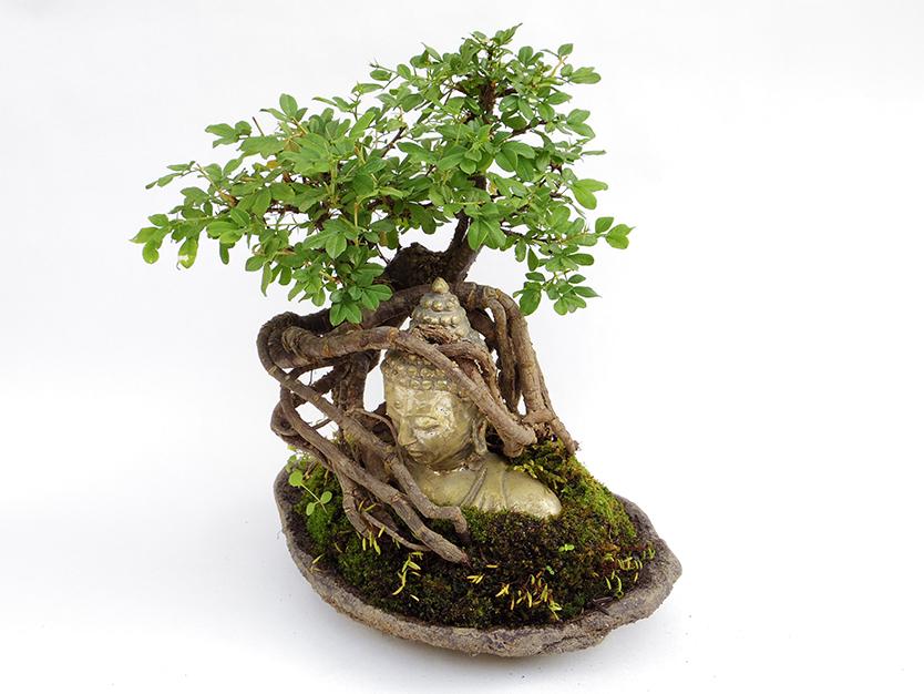 部屋にグリーンを取りいれる仏像盆栽