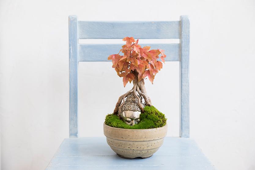 おもしろい仏像盆栽