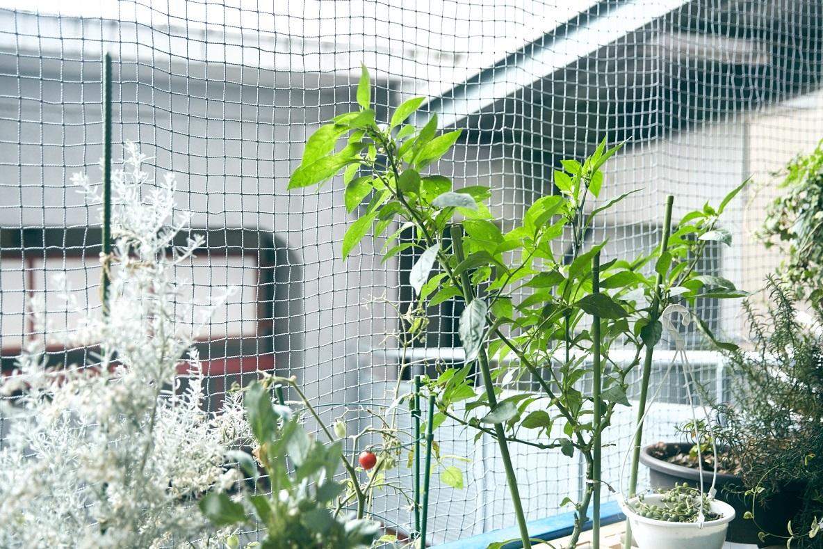 ベランダに鳥よけの網がついていたり、正面に建物があること