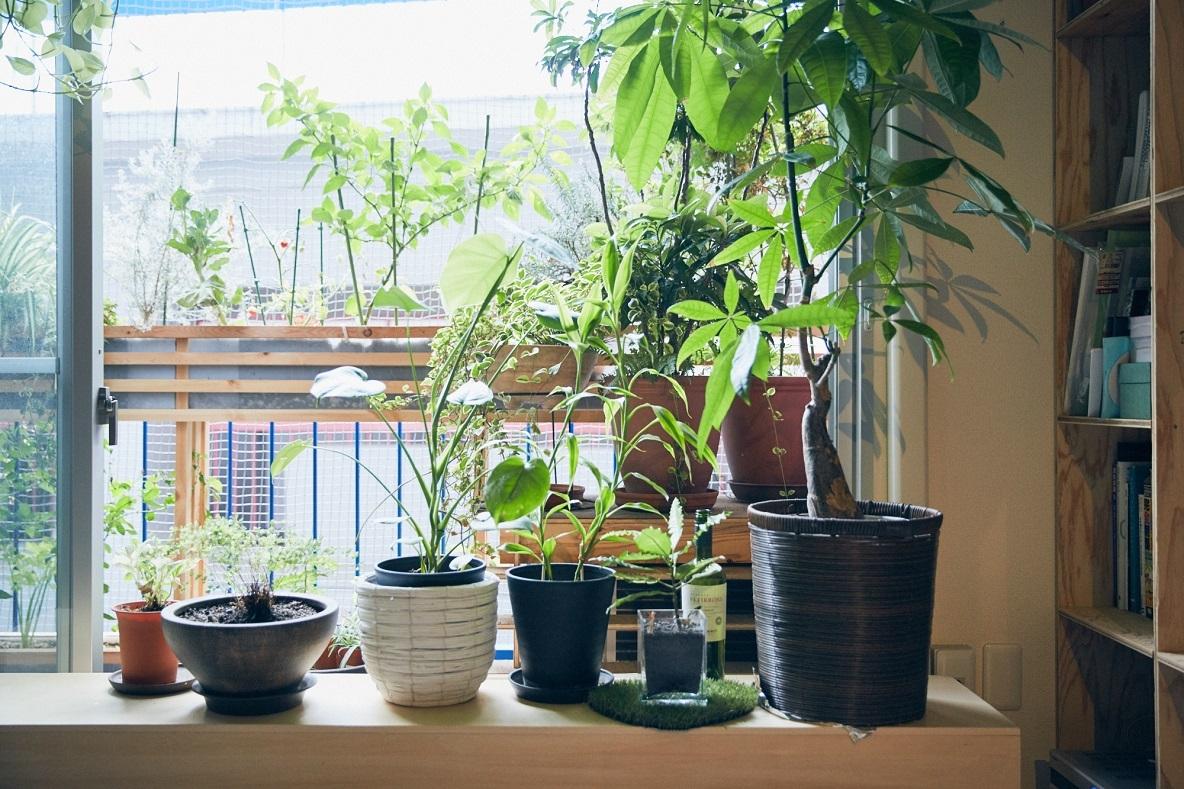 ベランダに並ぶ植物たち