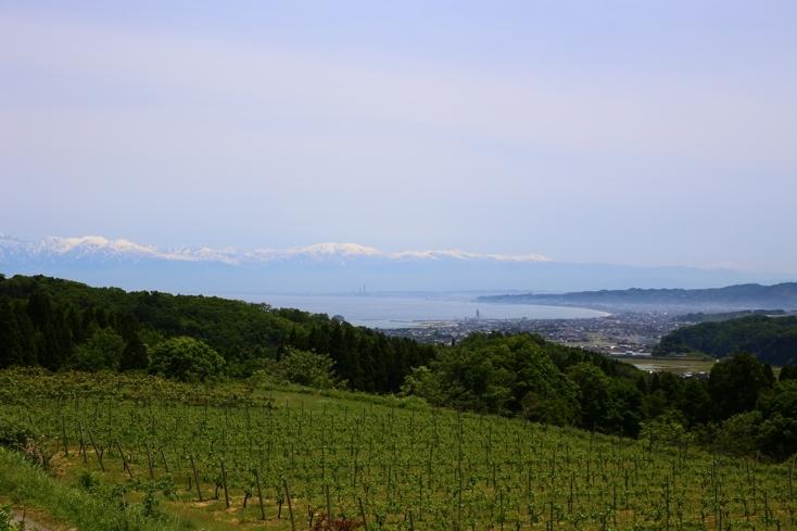 富山県氷見市のワイナリー「SAYS FARM」を紹介