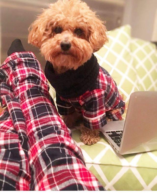 かわいい犬のパジャマ