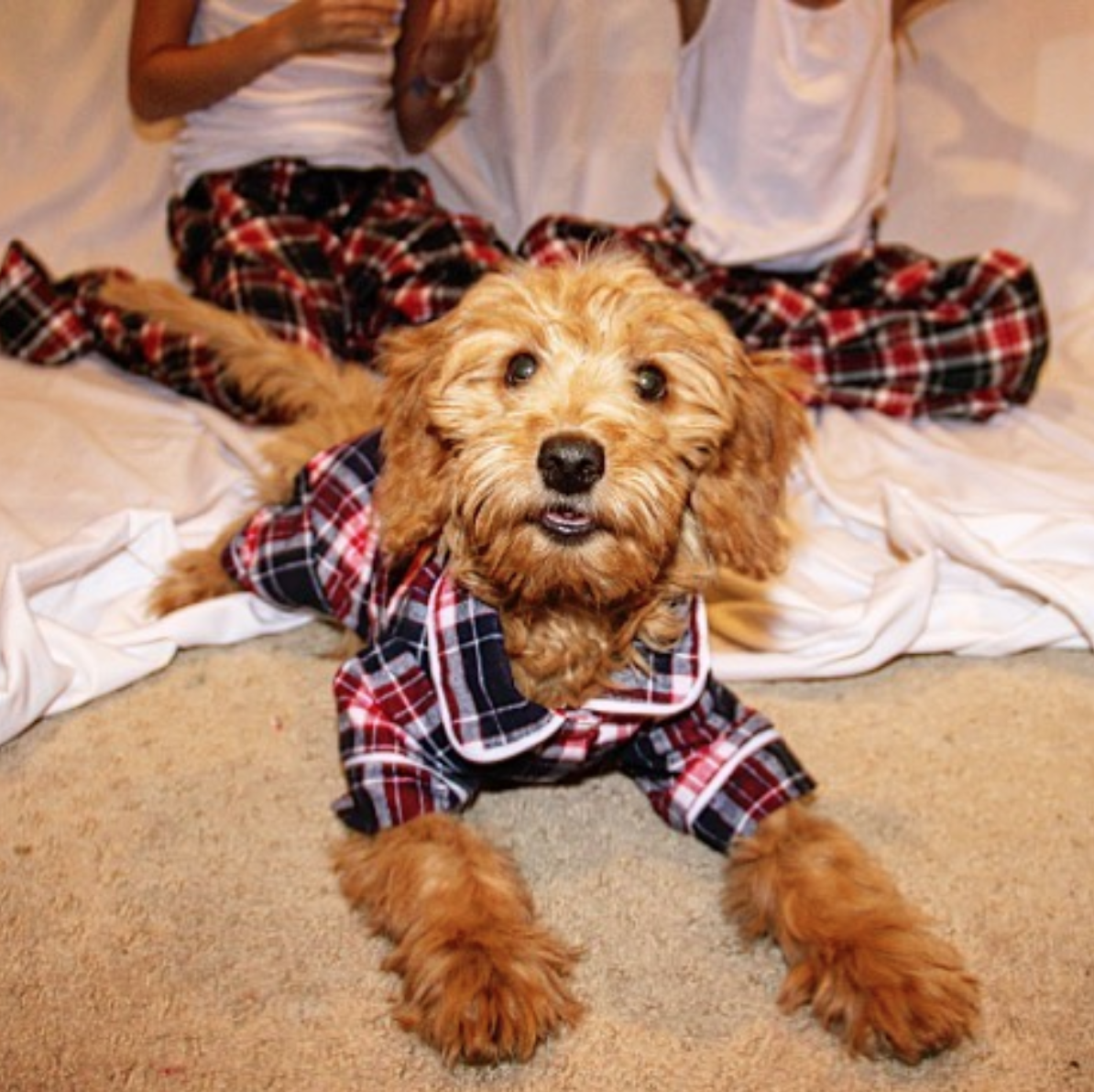 ペットとのペアルック。おそろいのパジャマで休日をまったり過ごす