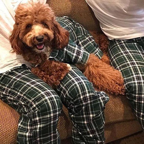 ペットとお揃いのパジャマ