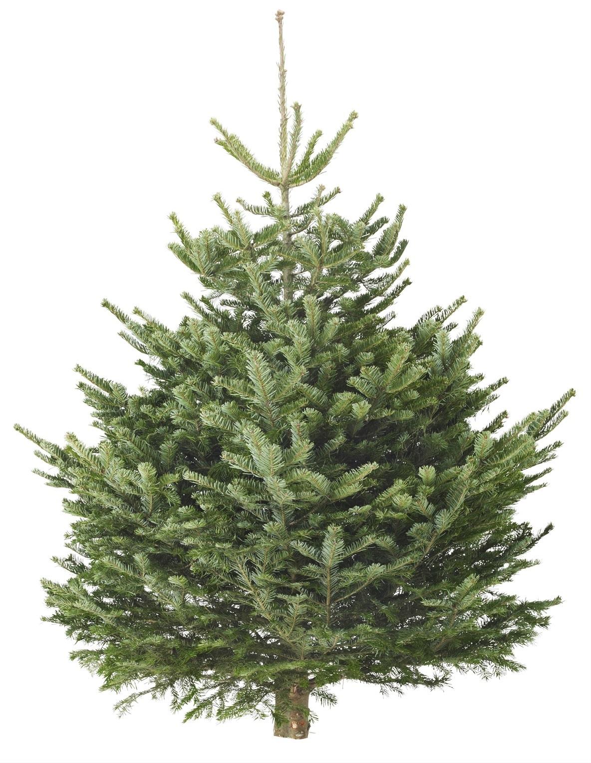 イケアのクリスマス。「本物のモミの木」は日本の家庭に合わせたサイズ