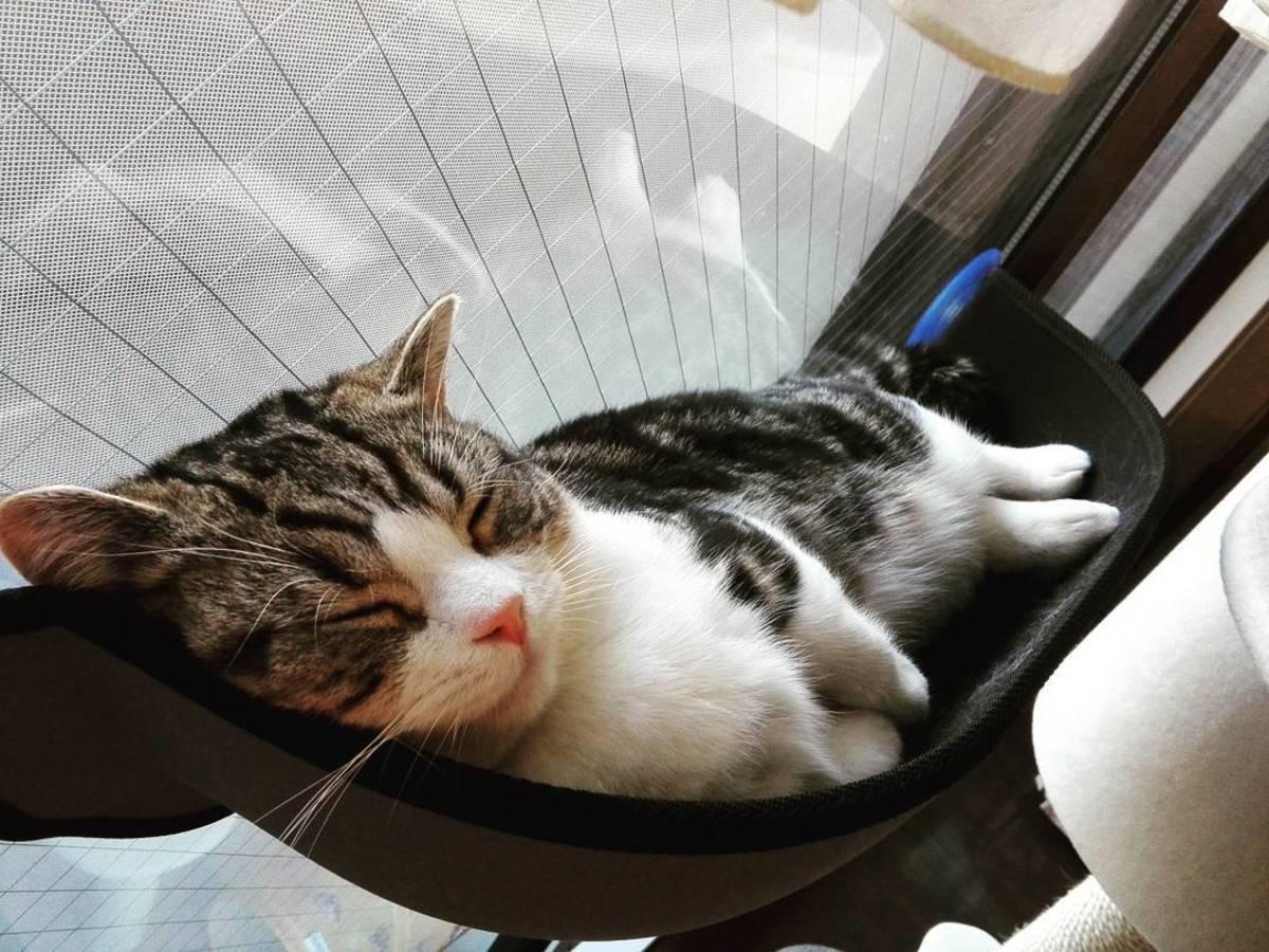 愛猫へのクリスマスプレゼントに。窓があればどこでも使えるハンモックベッド