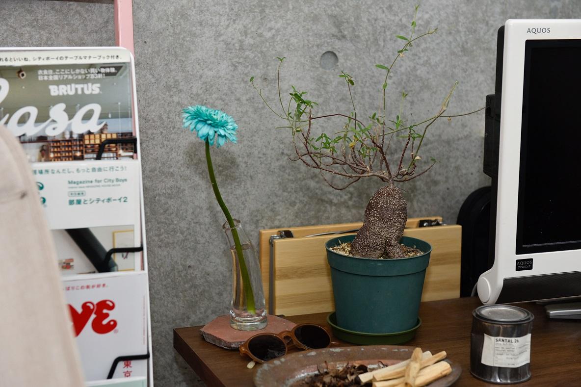 テレビ横の花瓶と花、香水など