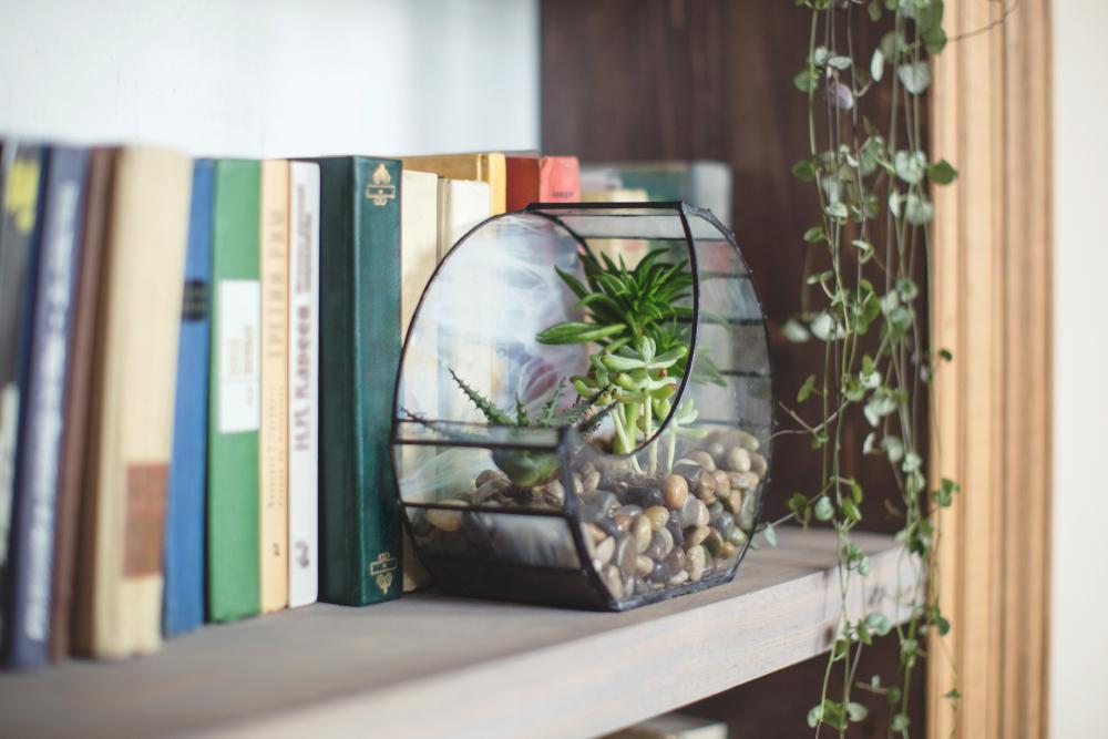 運気アップに効果的な観葉植物の画像