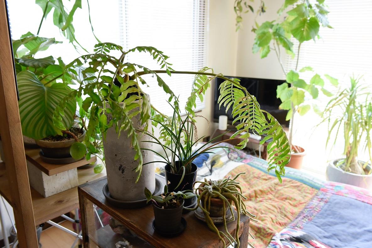 20~30種類もの観葉植物に囲まれて暮らす祐太さんと彩香さんの部屋
