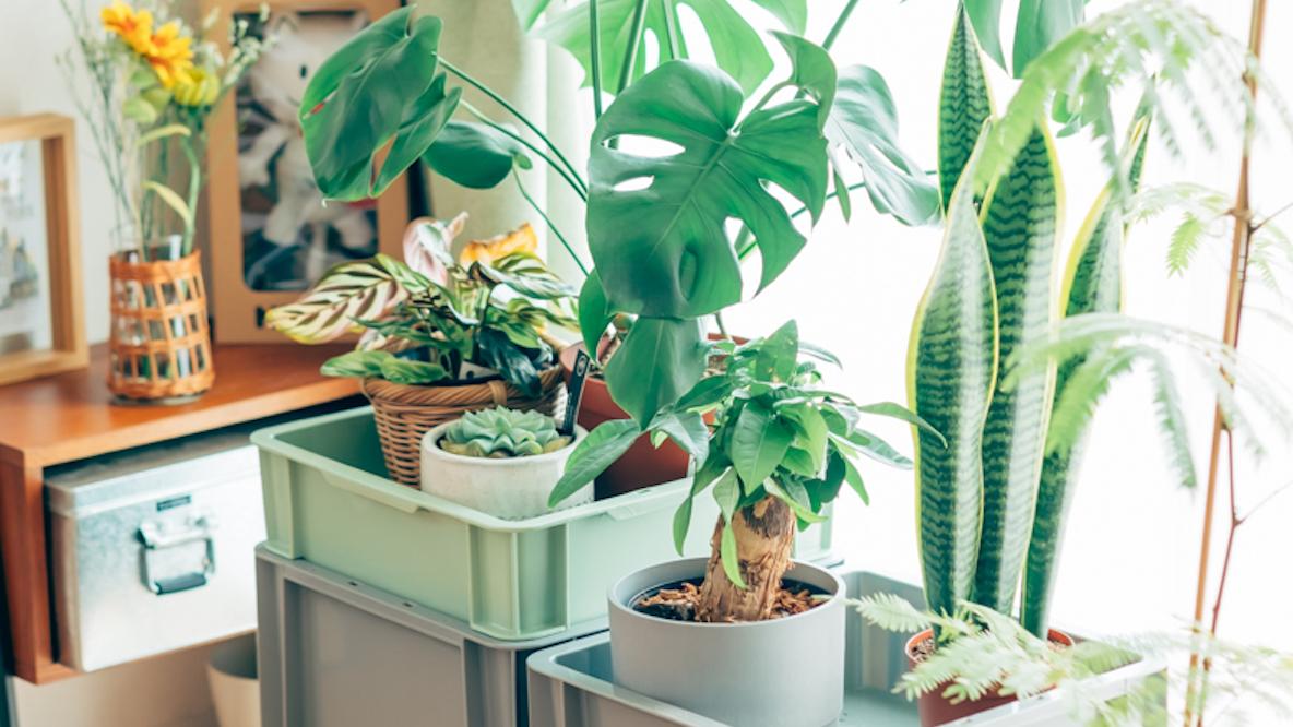 コンテナボックスを使った観葉植物のディスプレイ