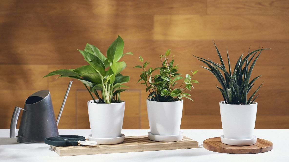 ROOMIE GREEN 販売する植物3種類