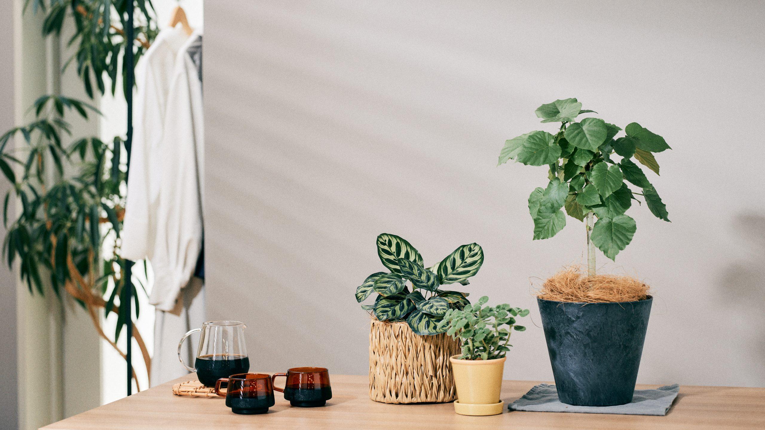 鉢と植物がセットで買える! 連載「みんなの部屋」で登場した植物をお手入れ方法とあわせてご紹介|ROOMIE GREEN