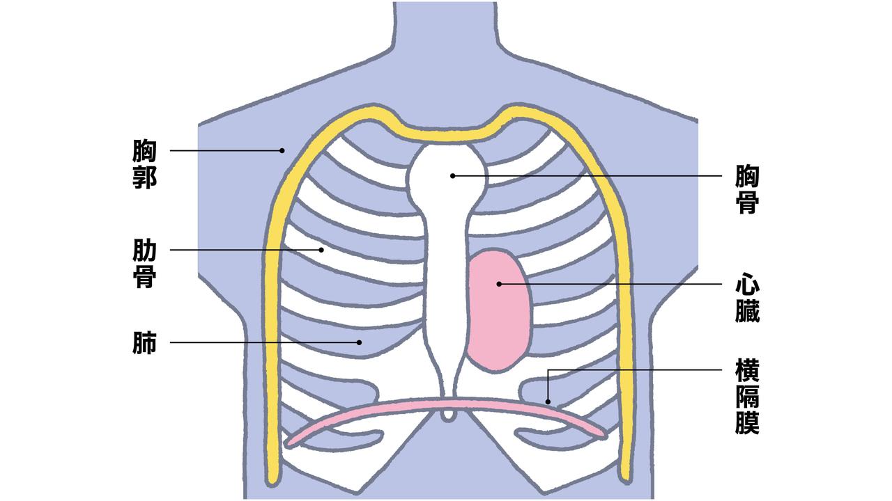 収縮 横隔膜