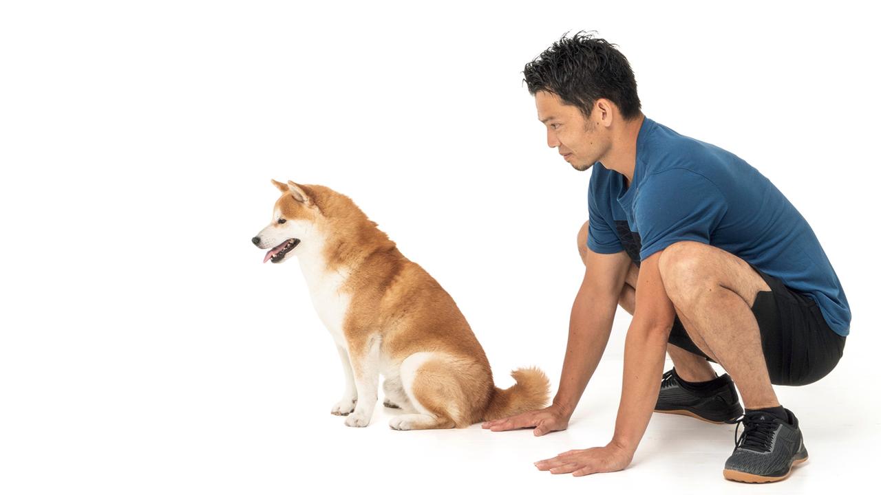 1. 玩具を遠くに置いてから、犬に「待て!」を