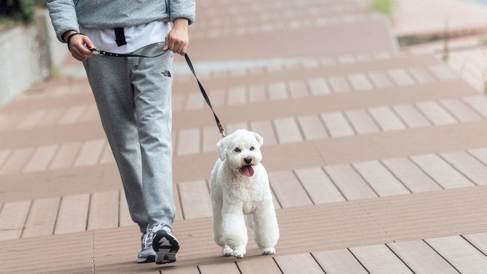 犬とアクティブウォーキング