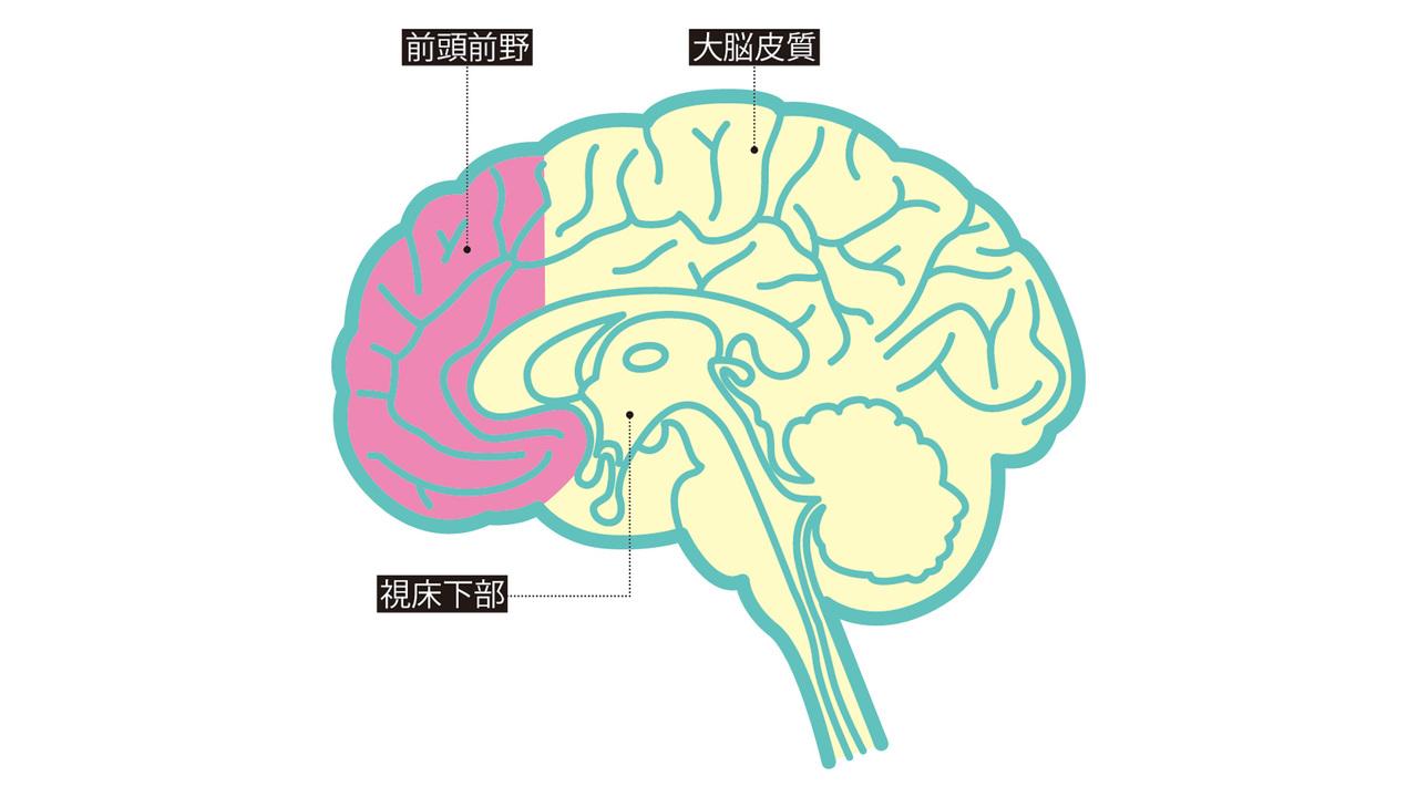 外的刺激の受け皿、 大脳皮質が 欲望を膨らませる。